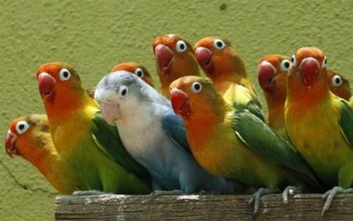 unity,beauty,pretty,parrot