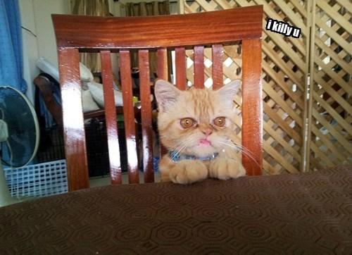 Evile Kitty