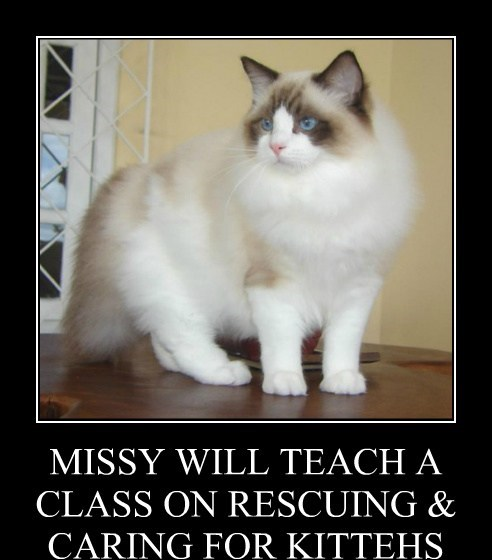 MISSY WILL TEACH A CLASS ON RESCUING & CARING FOR KITTEHS