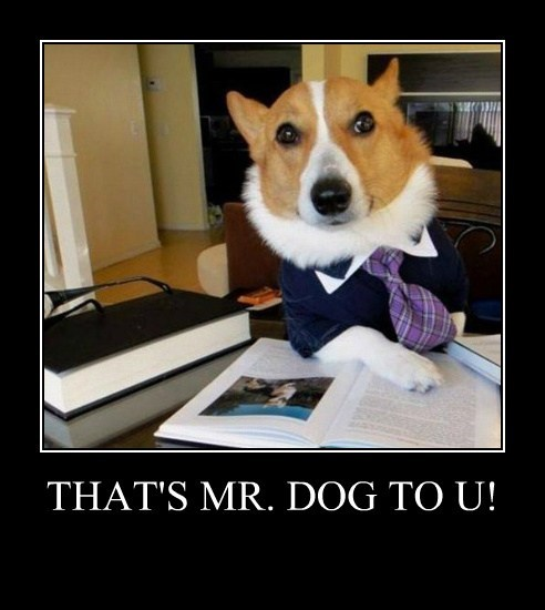 work,corgi,business,funny