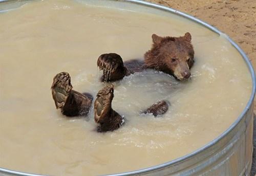 summer,bears,tub,bath,swim