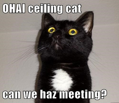 OHAI ceiling cat  can we haz meeting?