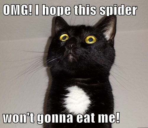OMG! I hope this spider  won't gonna eat me!