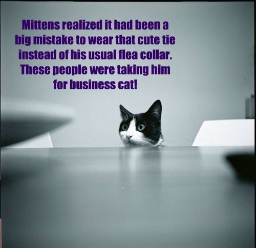Mittens realized it had been a  big mistake to wear that cute tie instead of his usual flea collar. These people were taking him  for business cat!