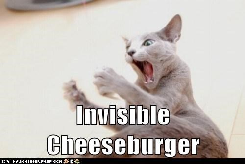 cheeseburger,invisible,Cats