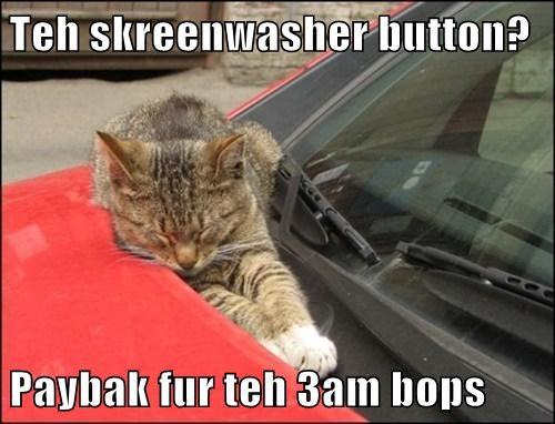 cat,dogs,water,windshield wiper