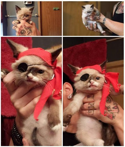 Internet Famous Cat of the Day: Sir Stuffington the One-Eyed Pirate Cat