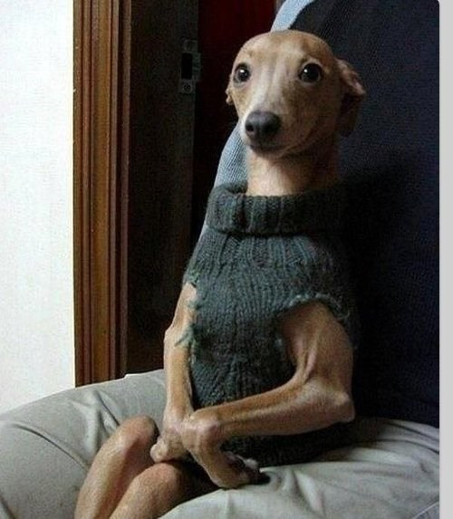 dogs,sweaters