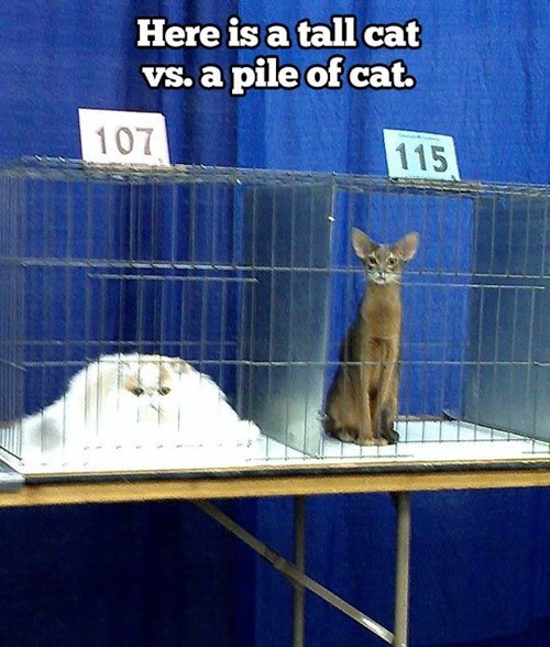 tall,pile,cage,contest,Cats,funny