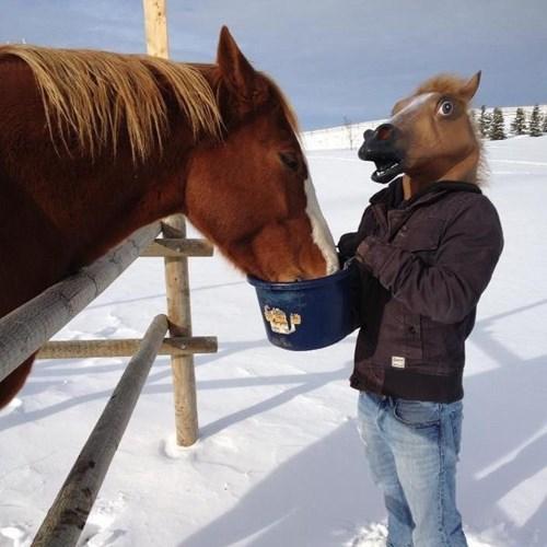 pets,horse head,funny