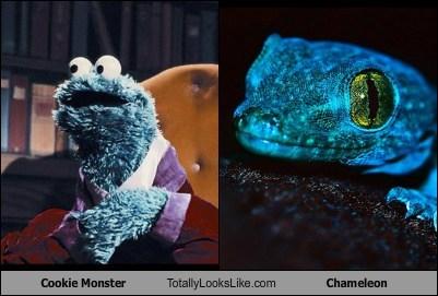 Cookie Monster Totally Looks Like Chameleon