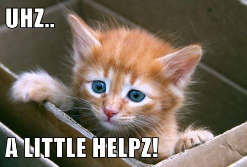 kitten,box,stuck,cute