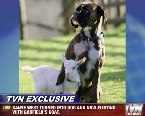 TVN EXCLUSIVE - KANYE WEST TURNED INTO DOG AND NOW FLIRTING WITH GARFIELD'S GOAT.