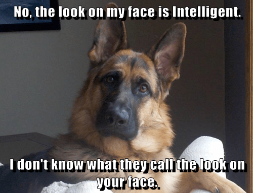 dogs,stupid face,intelligent