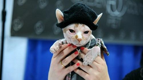 fashion,Cats