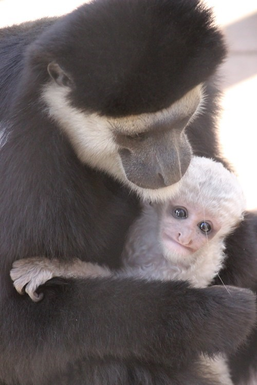 Baby Monkey or Tiny Grandpa?