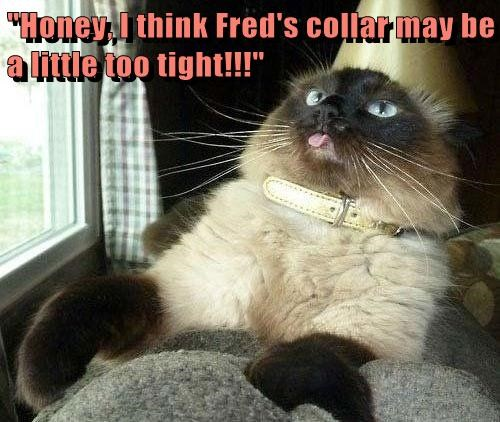 """""""Honey, I think Fred's collar may be a little too tight!!!"""""""