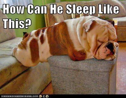 dogs,Cats,sleeping