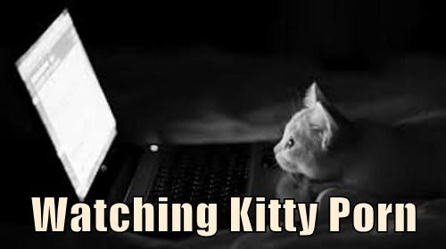 Watching Kitty pr0n