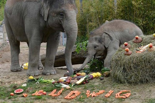 birthday,cute,elephants