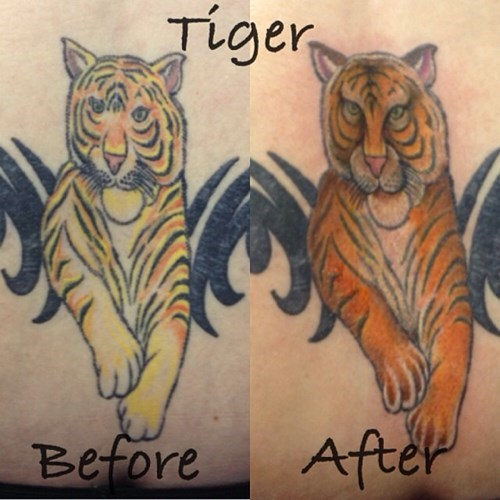 cover up,tattoos,tiger,funny