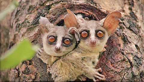 The Bush Baby Wins the Squee Spree!