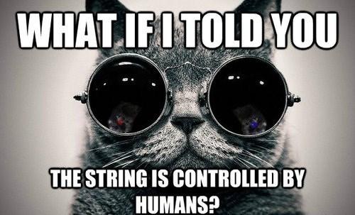 matrix,Cats,animals