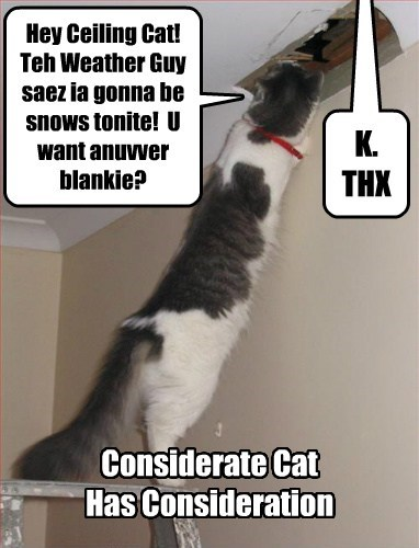 Thanks, Considerate Cat!