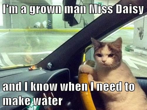 I'm a grown man Miss Daisy  and I know when I need to make water
