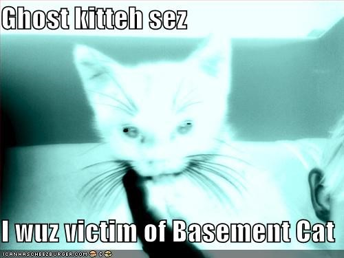 Ghost kitteh sez  I wuz victim of Basement Cat