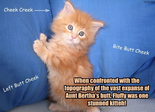 When confronted with the topography of the vast expanse of Aunt Bertha's butt, Fluffy was one stunned kitteh!