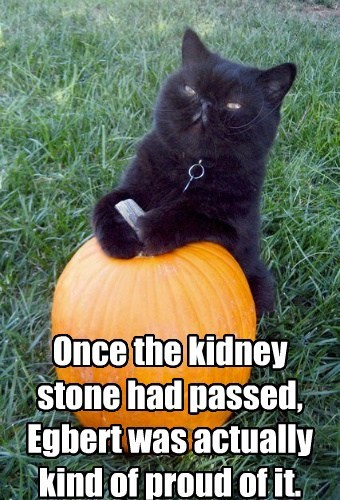 Once the kidney stone had passed, Egbert was actually kind of proud of it.