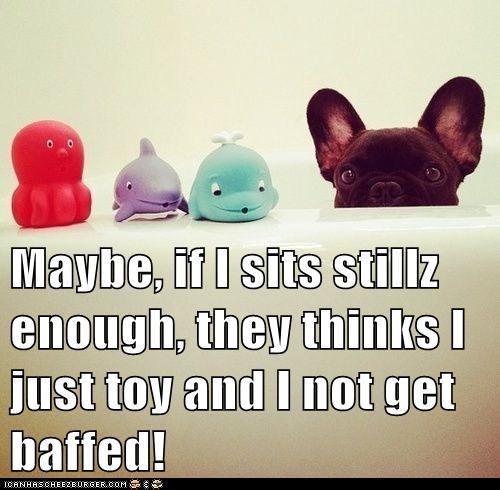 dogs,toys,bath,cute