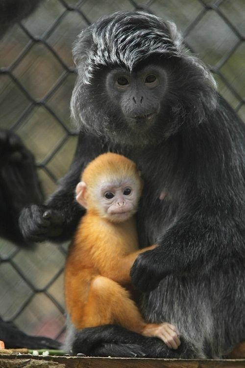 baby,primates,squee
