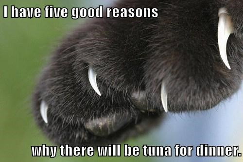 I have five good reasons  why there will be tuna for dinner.