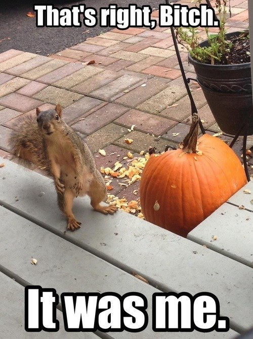 Even Squirrels Are into the Pumpkin Flavored Season