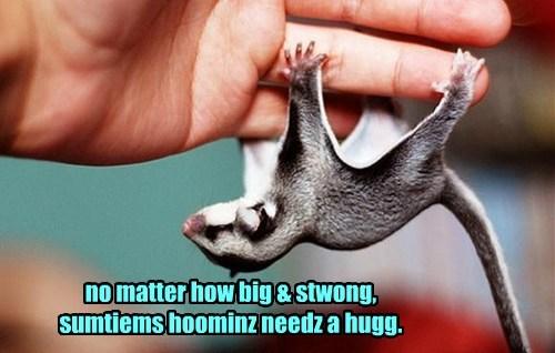 no matter how big & stwong,  sumtiems hoominz needz a hugg.