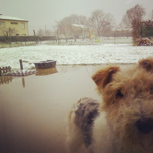 photobomb,dogs,snow,cute