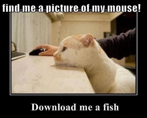 find me a picture of my mouse!