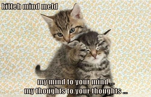 kitteh mind meld  my mind to your mind ...                                           my thoughts to your thoughts ...