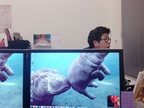 hippos,photobomb,perfectly timed,monitors