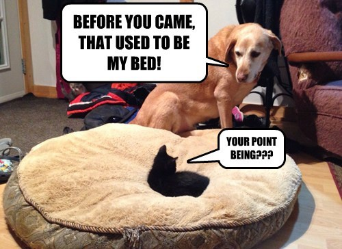BEFORE YOU CAME, THAT USED TO BE MY BED!