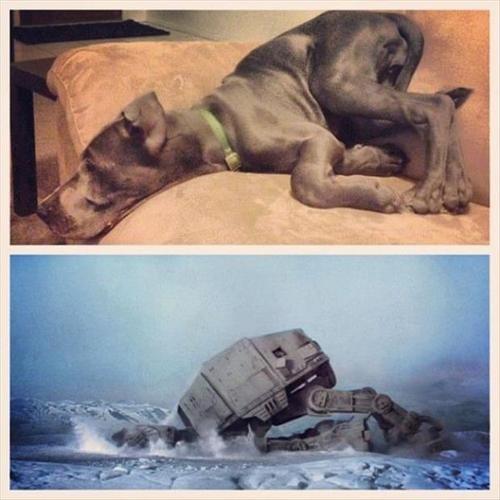 dogs,star wars,at at
