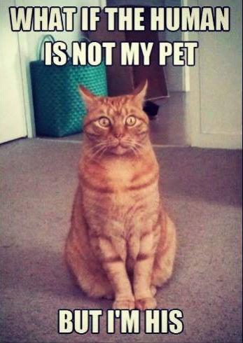 human,crazy talk,Cats,realize