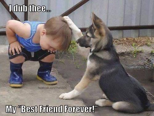 friendship,dogs,knights,cute