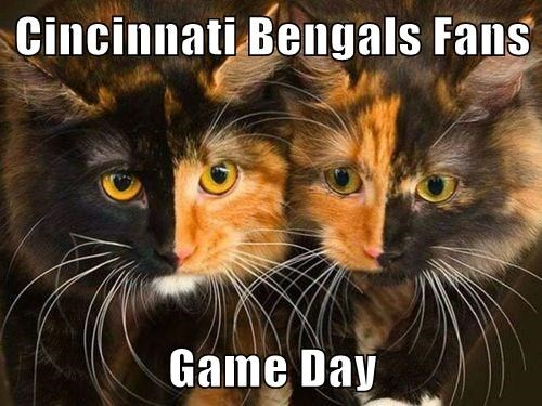 Cincinnati Bengals Fans  Game Day