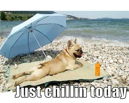 dogs,tan,cute,beach,sun