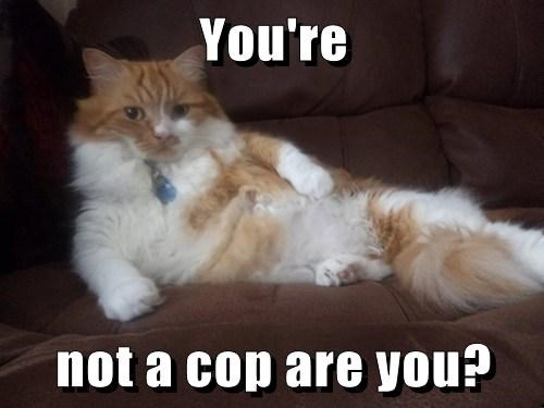 You're   not a cop are you?