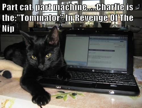 "Part cat, part machine.....Charlie is the:""Tominator"" In Revenge Of The Nip"