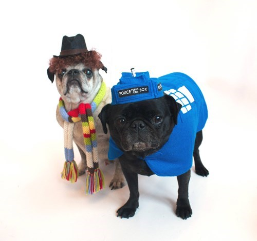 dogs,cosplay,cute,doctor who